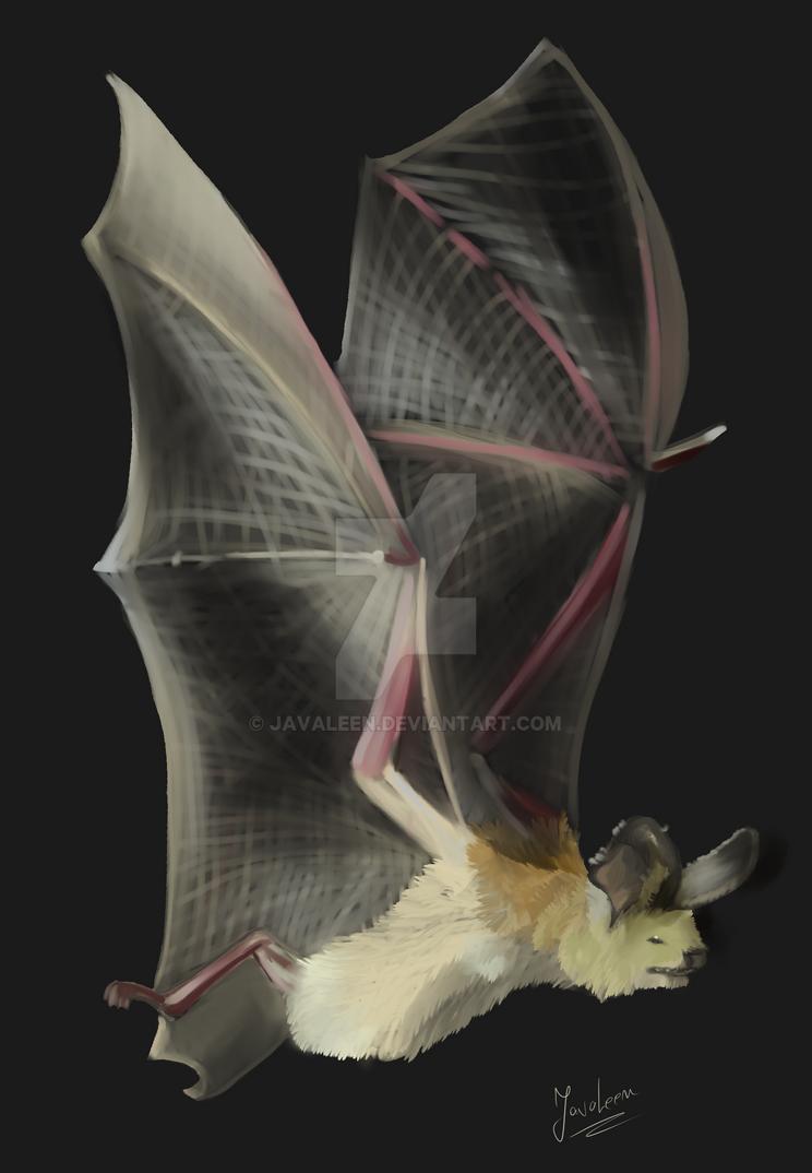 Bat study by JavaLeen