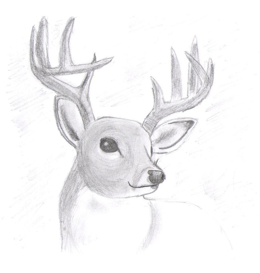 How To Draw A Realistic Reindeer Realistic deer by shademist030