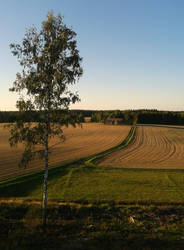 Phone: Evening Fields