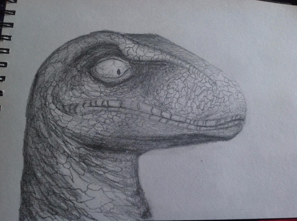 Raptor by Jessie123452bee