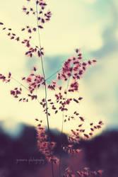 summer is fading away by jenmarie123