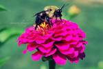 a way to a bees heart.