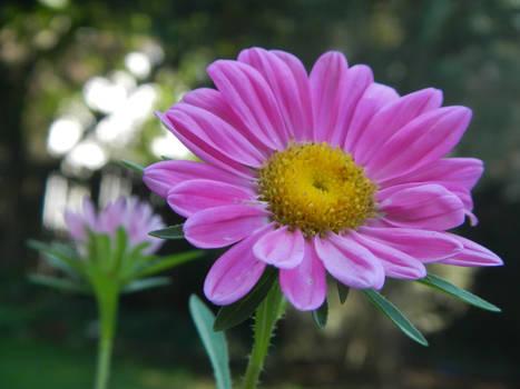 Pink Wild Bloom