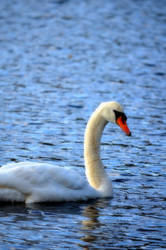 Swan Lake by elephanza
