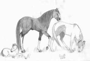 horses by Adamantium-fury