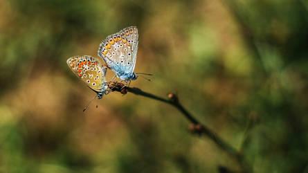 wings by LucianDinca