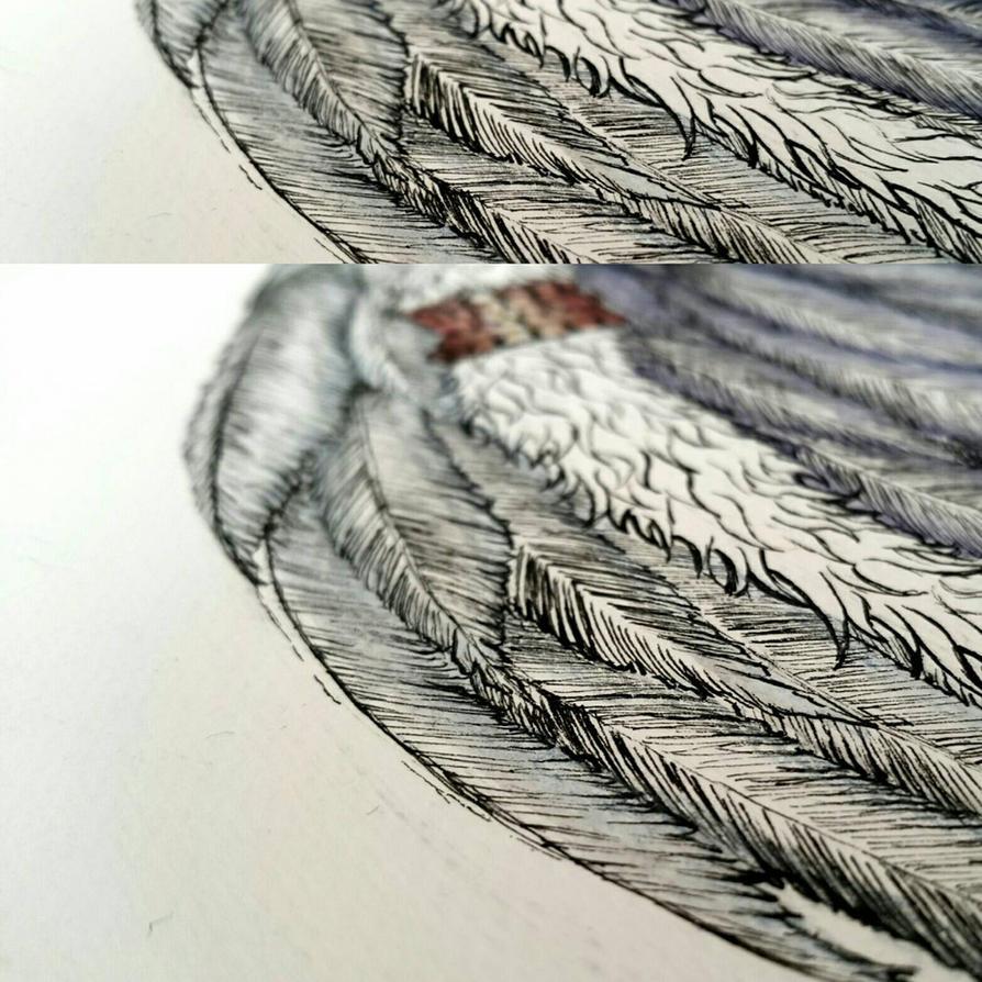Angel wing by furman114