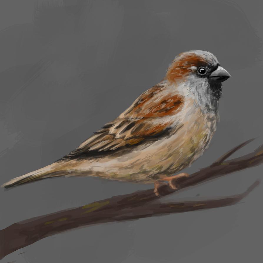 Sparrow by Aladorra