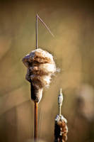 cat tails by Photograph-er