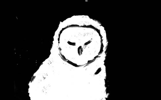 Owl Experimental Animation