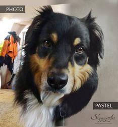 Dog portrait: photo vs pastel