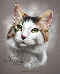 Cat portrait in pastel JERRY by Skyzune ART
