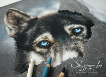 Dog portrait in pastel by Skyzune ART