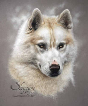 HUSKY DOG DRAWING - LOLY