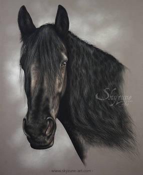 FRIESIAN HORSE DRAWING - MAAIKE