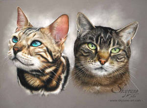 CATS DARWING - ULYSSE and HIDDEN