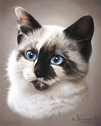 Kitten drawing - SOUKY by SKYZUNE ART