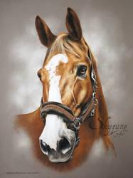 Horse drawing - PIREX by SKYZUNE ART