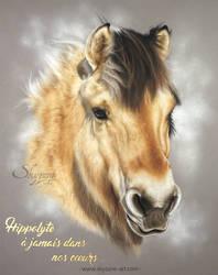 Horse portrait drawing - HIPPOLYTE