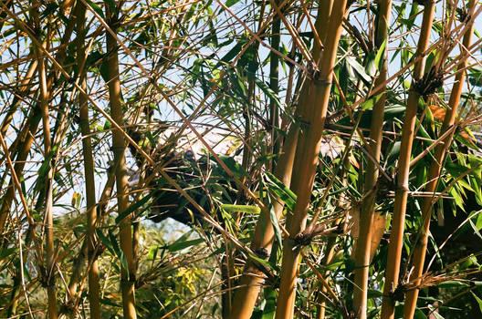 Between the bamboo