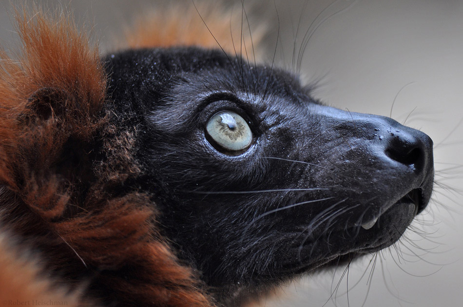 Wild Eyes by robbobert