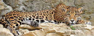 Jaguar Panoramic by robbobert