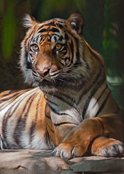 Relaxing Tiger by robbobert