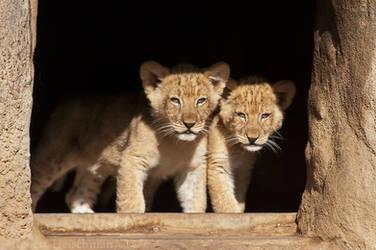 Little Predators by robbobert