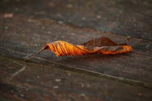 Fall by czarnatecza