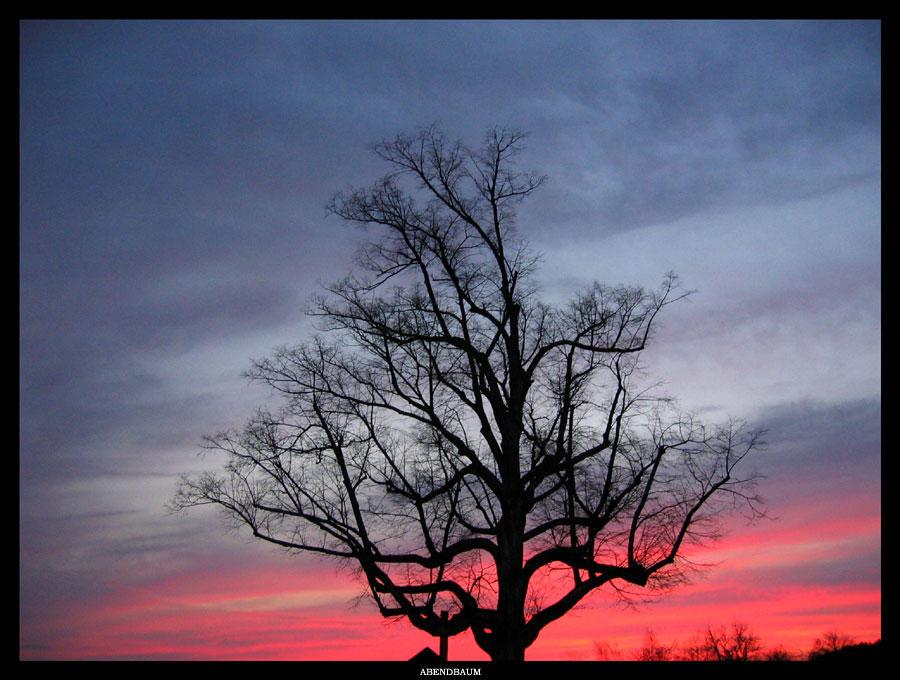 Abendbaum by pitchblacknight