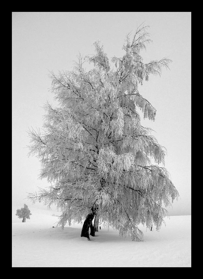 Frozen Tree by pitchblacknight