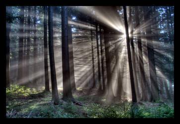 Symphony of Light by pitchblacknight