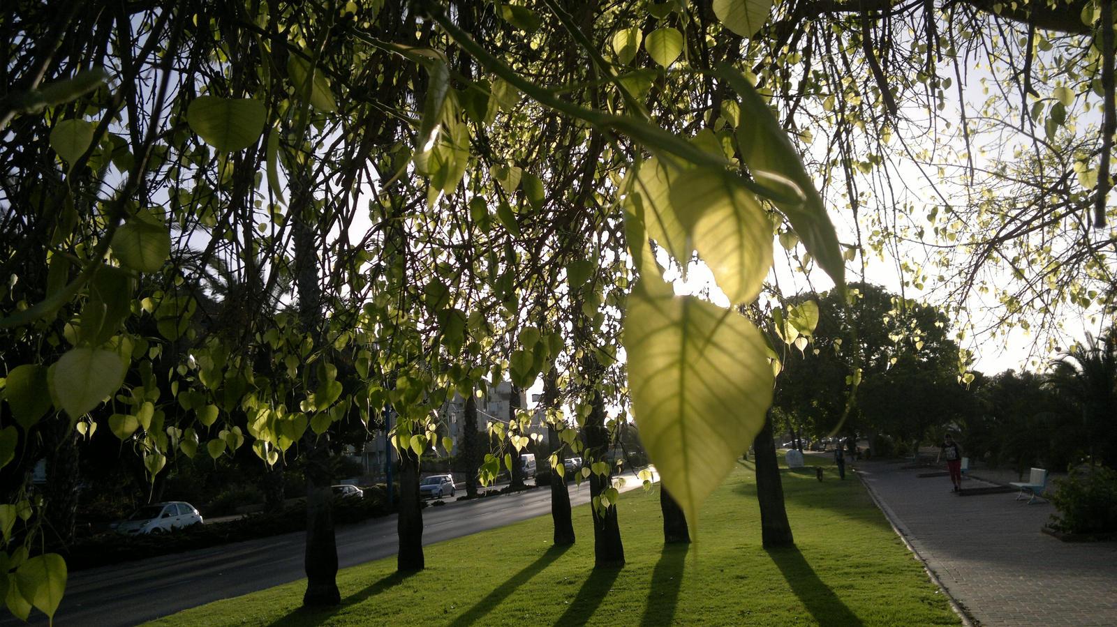 Green leaves 2. by Shantifiy