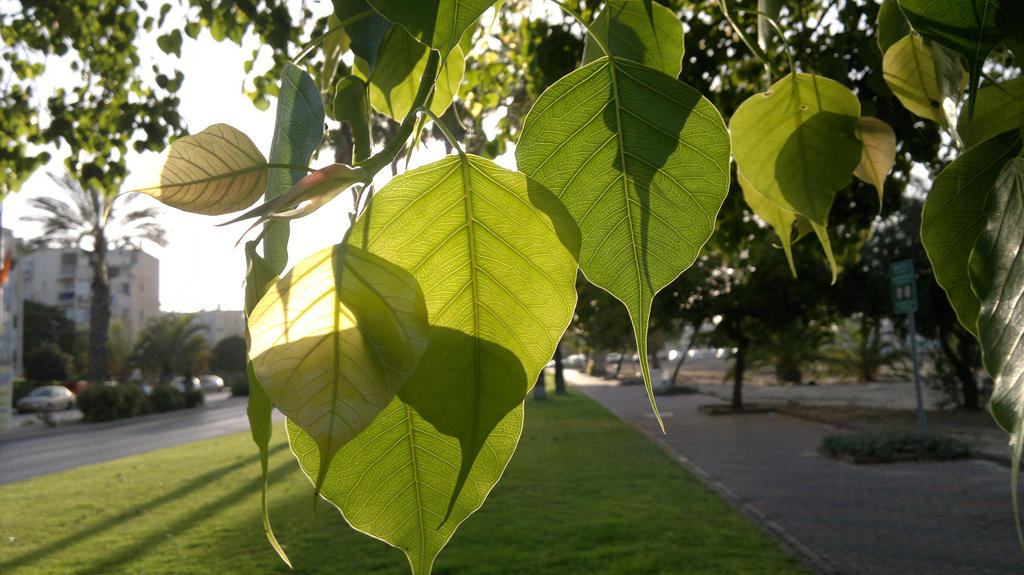 Green leaves 4. by Shantifiy