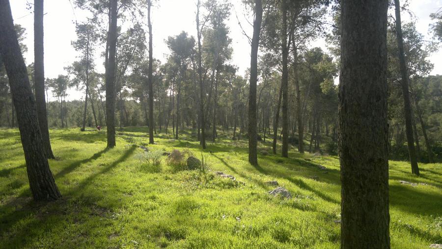 Forest of Kriyat Gat. by Shantifiy