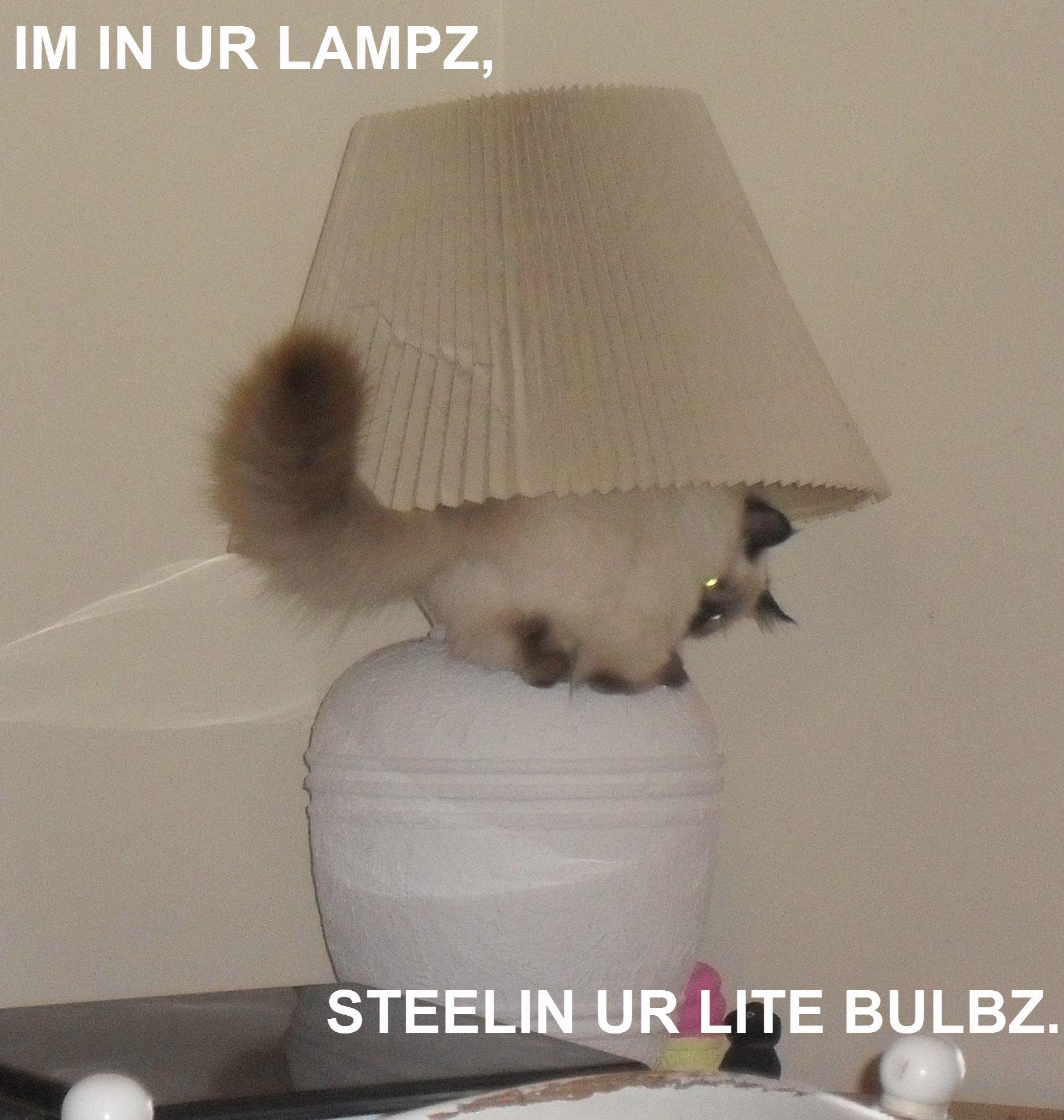 LOL Cat by ReneeStone
