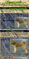Basic Canine Anatomy Tutorial