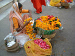 fiori india