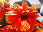 14. FlowerBee
