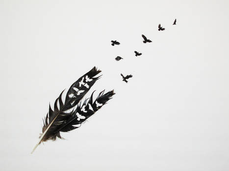 Feather Cuts 2