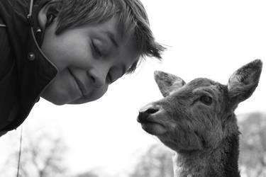 When Jay met a deer