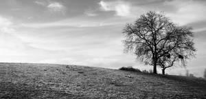 Winter by BourbonInYourEyes