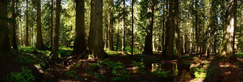 Ross Creek Cedars 2012-06-25