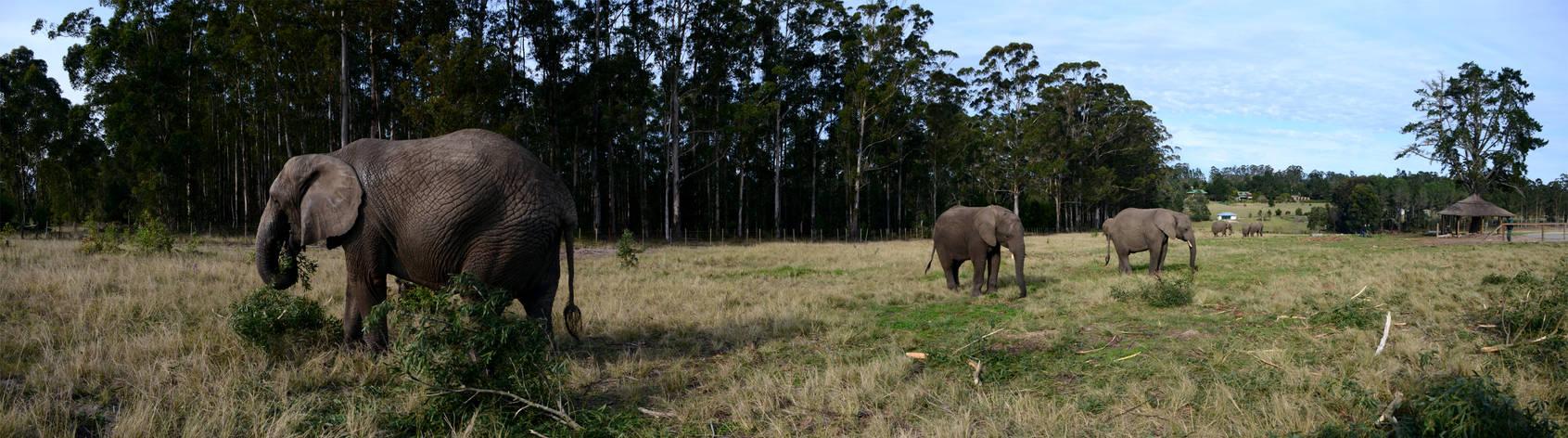 Walking Amidst Elephants