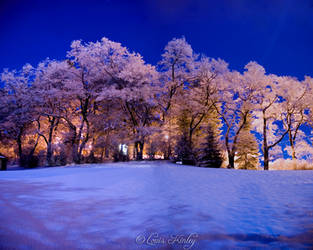 Winter Night by whitelouis