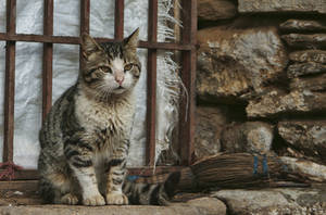 farm cat by icedheartgd