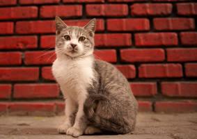 cat samatya by icedheartgd