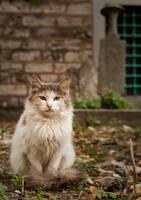 graveyard cat by icedheartgd