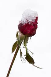 Frozen by icedheartgd