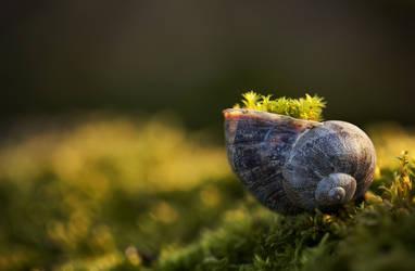 Moss pot by icedheartgd